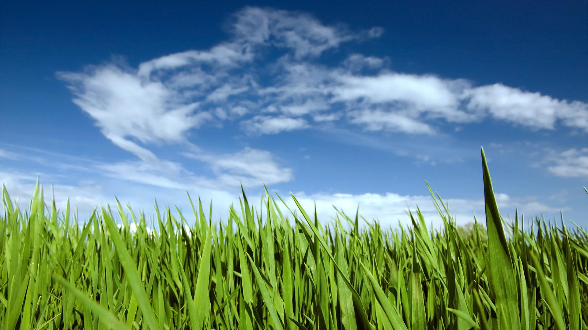 Windows 10 Wallpaper 1080p Full Hd Grass With Blue Sky Hd Desktop